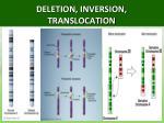 deletion inversion translocation
