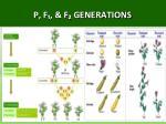 p f f generations1