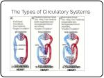 the types of circulatory systems