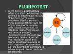 pluripotent