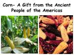 corn a gift from the ancient people of the americas