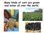 many kinds of corn are grown and eaten all over the world