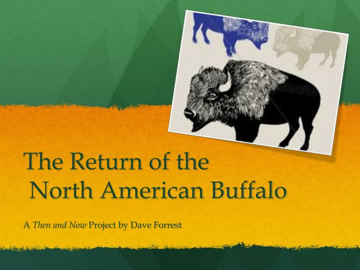 the return of the north american buffalo n.