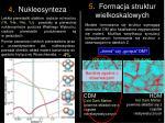 4 nukleosynteza