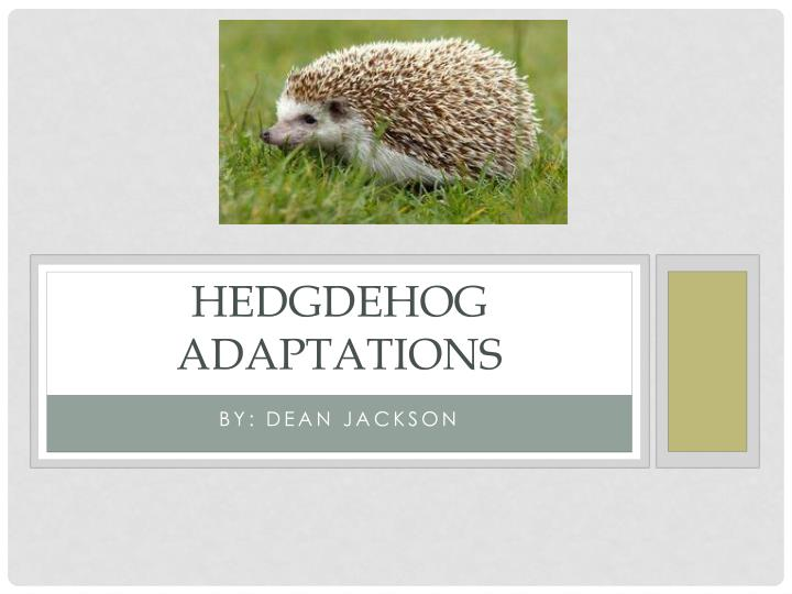 hedgdehog adaptations n.