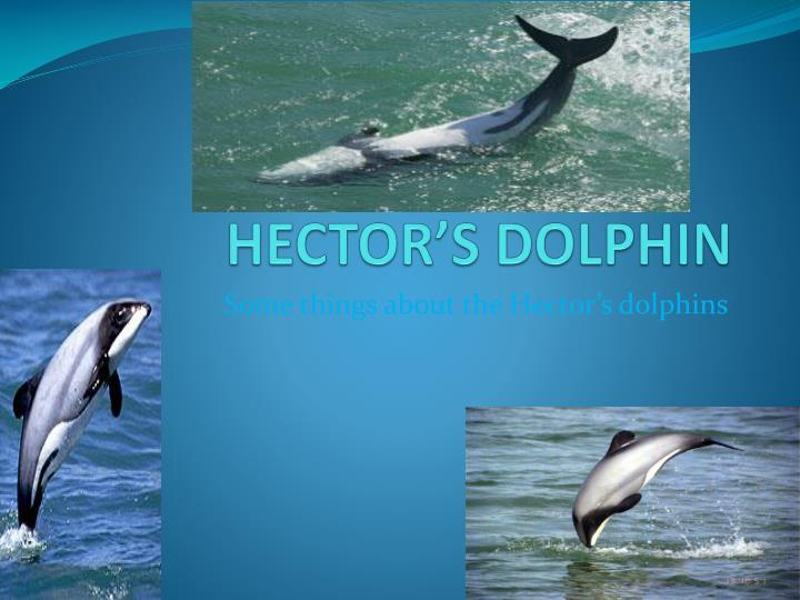 hector s dolphin n.