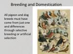 breeding and domestication