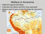 wallace in amazonia