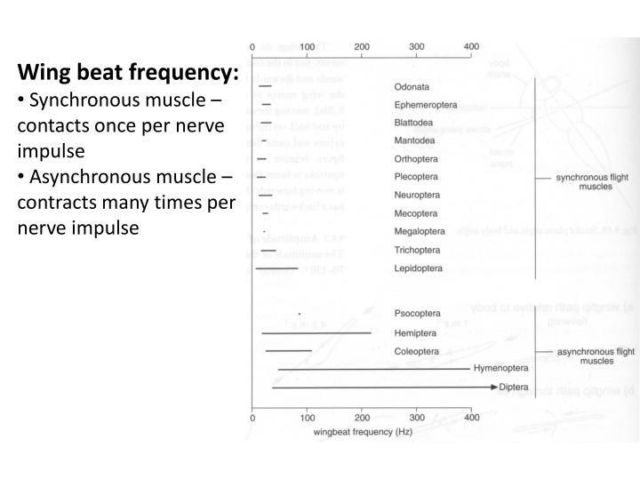Wing beat frequency: