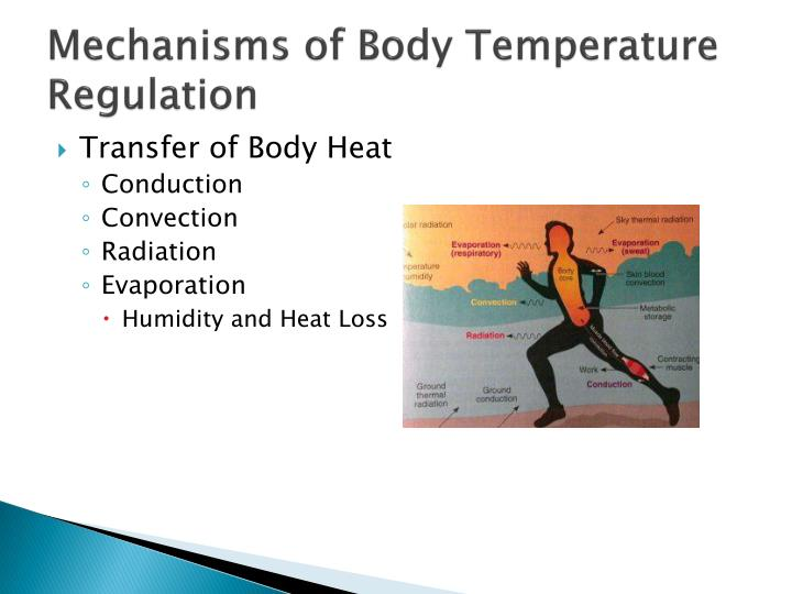 biology how body shape affects heat loss essay Hi, in order to write a good essay about negative feedback of homeostasis, first you should start your essay by defining homeostasis then, explain the two types of homeostasis talk briefly about positive feedback, and then mention that this essay is about the negative feedback.