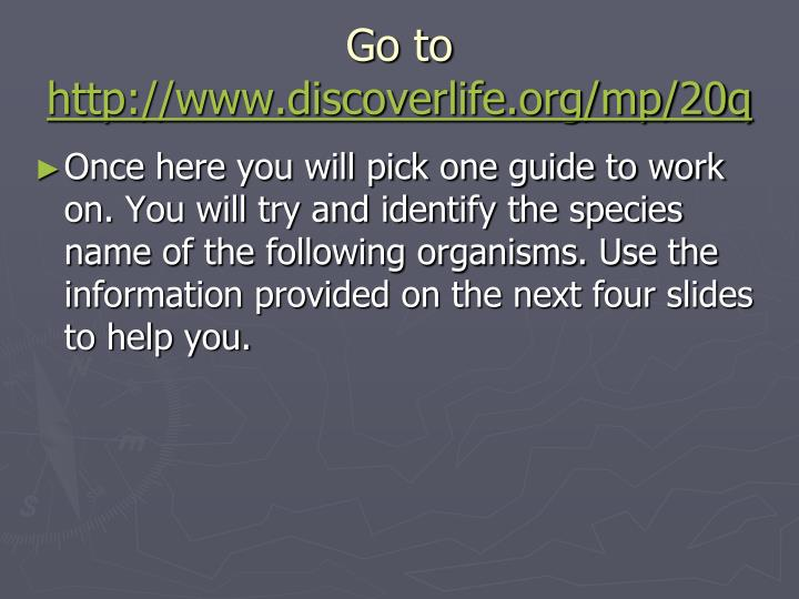 Go to http www discoverlife org mp 20q