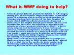 what is wwf doing to help