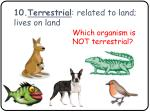 10 terrestrial related to land lives on land