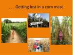 getting lost in a corn m aze