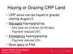 haying or grazing crp land