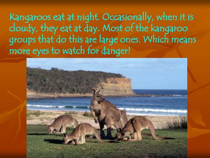 Kangaroos eat at night. Occasionally,