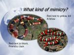 what kind of mimicry