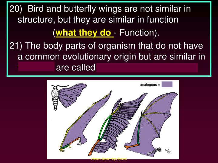 20)  Bird and butterfly wings are not similar in structure, but they are similar in function