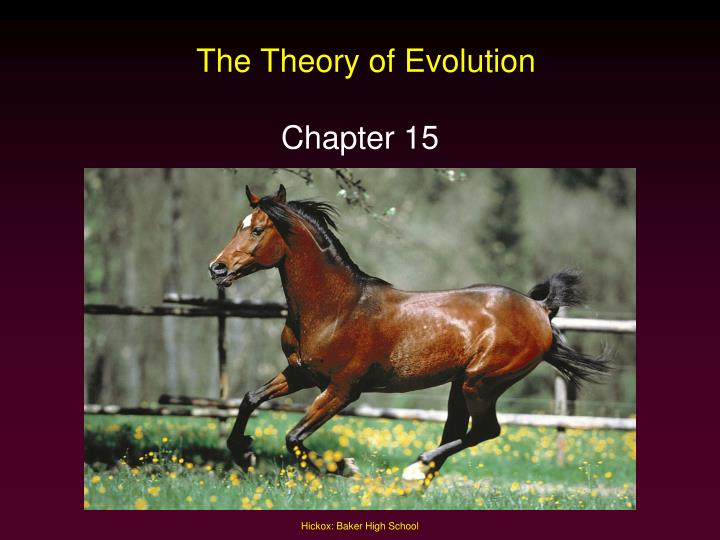the theory of evolution n.