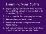 finishing your cattle