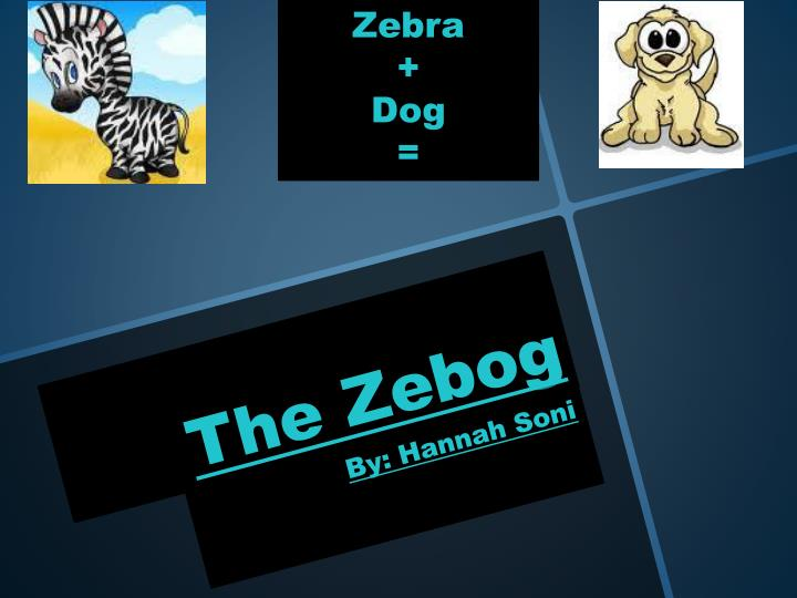 the zebog n.