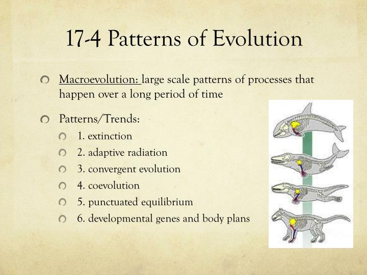 PPT Chapter 60 PowerPoint Presentation ID60 Gorgeous Section 174 Patterns Of Evolution