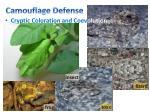 camouflage defense