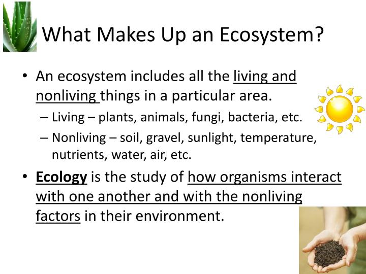 What makes up an ecosystem