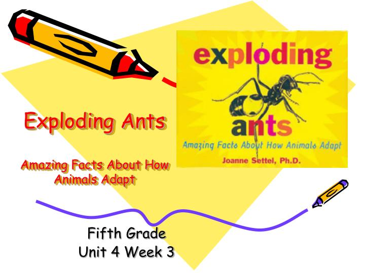 exploding ants amazing facts about how animals adapt n.