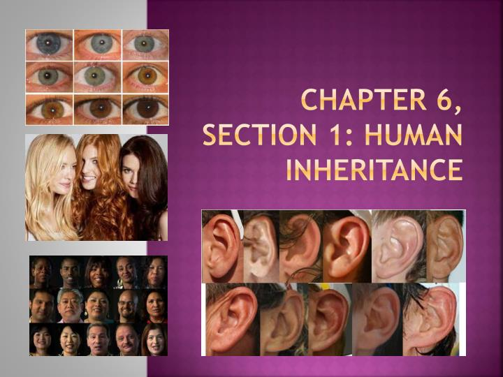 chapter 6 section 1 human inheritance n.