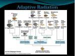 adaptive radiation2