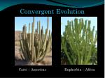 convergent evolution1