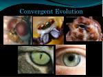 convergent evolution3