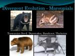 divergent evolution marsupials1