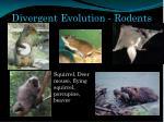divergent evolution rodents