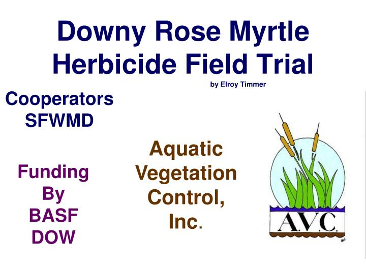 downy rose myrtle herbicide field trial by elroy timmer n.