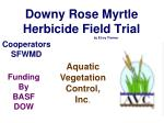 downy rose myrtle herbicide field trial by elroy timmer
