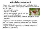 altricial development