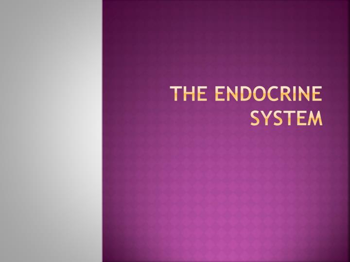 the endocrine system n.