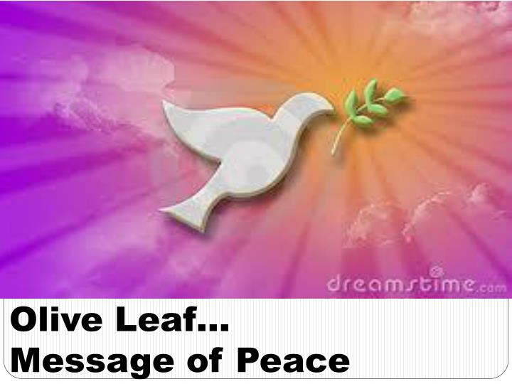 olive leaf message of peace n.