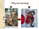 why harmonizing