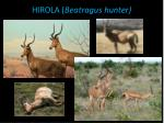hirola beatragus hunter