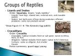 groups of reptiles