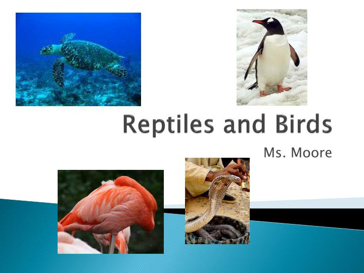 reptiles and birds n.