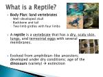 what is a reptile