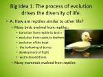 big idea 1 the process of evolution drives the diversity of life1