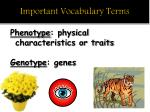 important vocabulary terms