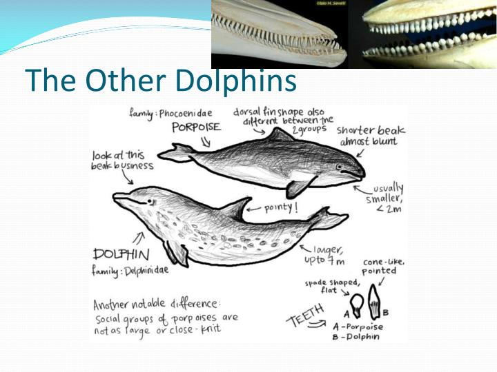 the other dolphins n.