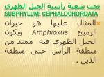 subphylum cephalochordata