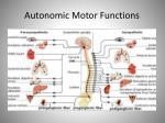 autonomic motor functions